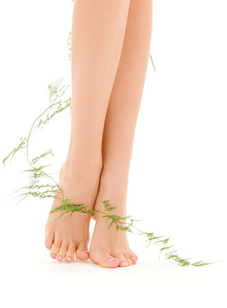 picture of female legs with green plant over white Stock Photo - 5660051
