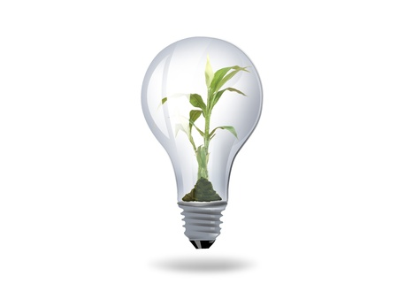 illustration of light bulb with plant inside illustration