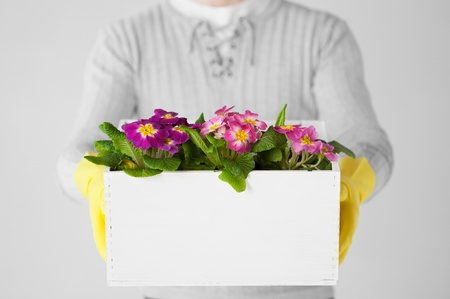 close up of man holding  big pot with flowers Stock Photo - 19001285