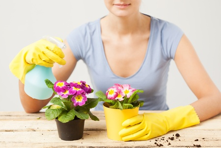 lovely housewife with flower in pot and spray bottle photo