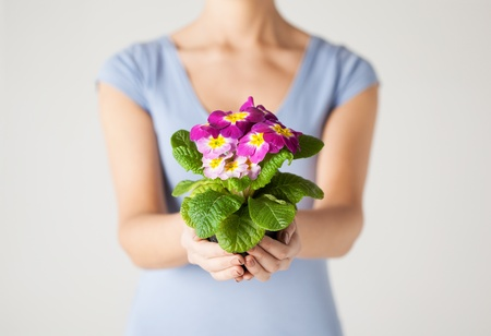 close up of woman s hands holding flower in pot photo