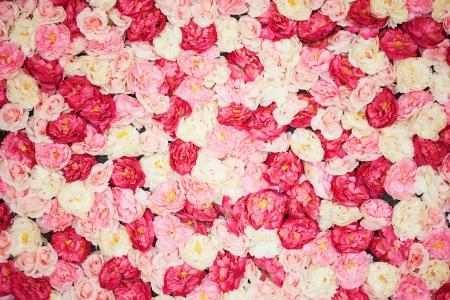 helder beeld van de achtergrond vol met witte en roze pioenrozen