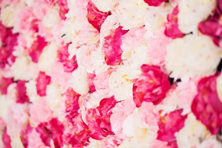 bright picture of background full of white and pink peonies Stock Photo