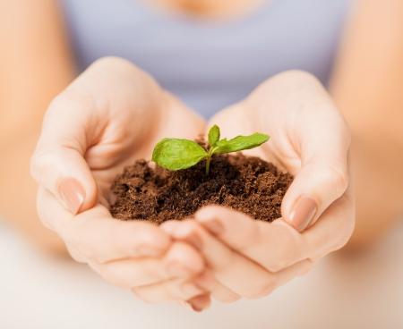 image de femme avec les mains pousses vertes et au sol