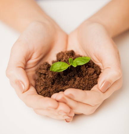 picture of woman hands with green sprout and ground photo