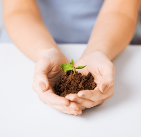 sprouting: picture of woman hands with green sprout and ground
