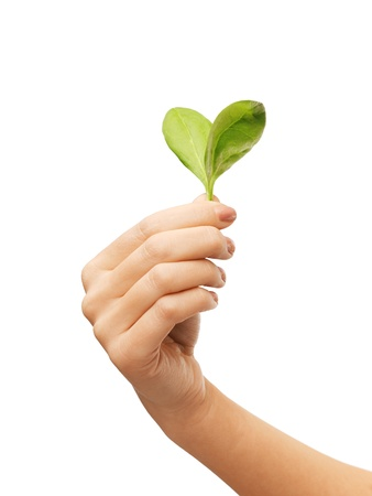 woman hand with green leaves in a heart shape Stock Photo - 20699791