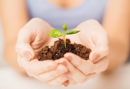 緑の芽と地面で女性の手の画像