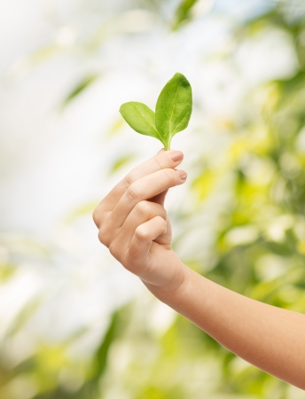 ecology and healthy food - woman hand with green sprout