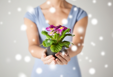 close up of womans hands holding flower in pot photo