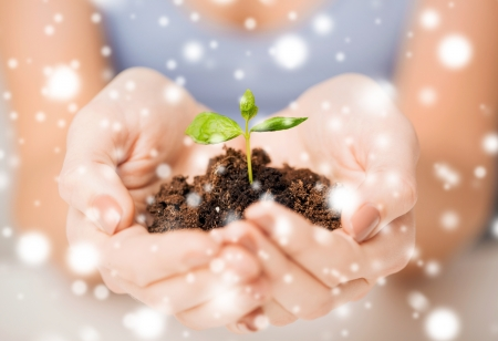eco, bio, environment, growth, care concept - woman hands with green sprout and ground photo