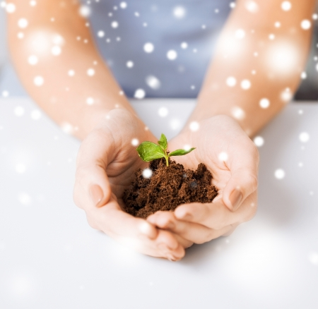 earth, care, love and growth concept - woman hands with green sprout and ground photo