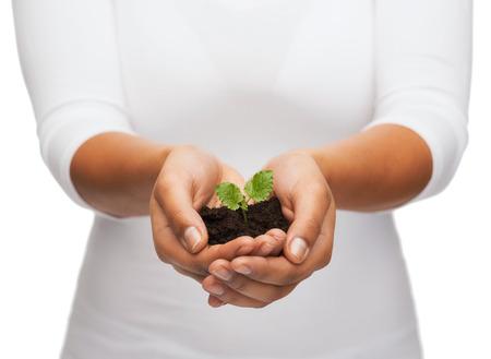 不妊治療と自然概念 - 女性のクローズ アップ手土で植物を保持 写真素材 - 25849844