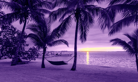 vacation, beach, summer and leisure concept - silhouettes of coconut trees with hammock on the beach, purple sunset view photo