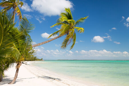 plage: beach, nature, sea, summer and leisure concept - tropical beach with palm trees