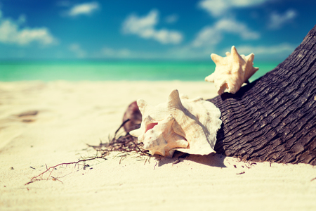 waterside: beach, summer and holidays concept - close up of seashell on tropical beach