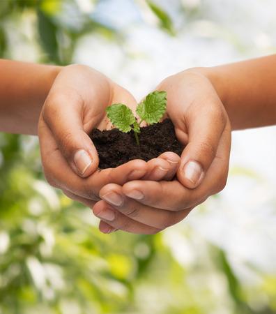 medioambiente: la fertilidad, el medio ambiente, la ecolog�a, la agricultura y el concepto de naturaleza - de cerca de manos de la mujer que sostiene la planta en el suelo sobre fondo verde Foto de archivo