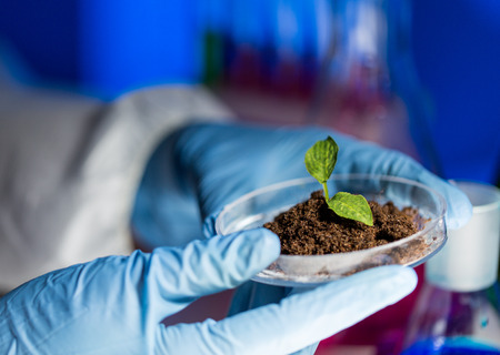 science, biology, ecology, research and people concept - close up of scientist hands holding petri dish with plant and soil sample in bio laboratory Stock Photo