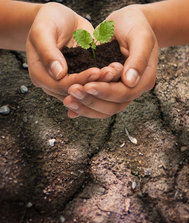 agriculture: fertility, environment, ecology, agriculture and nature concept - closeup of woman hands holding plant in soil over ground background