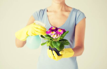 flower in pot: close up of woman holding pot with flower and spray bottle Stock Photo