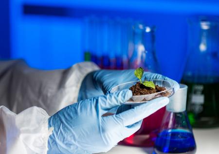 close up van wetenschapper handen die petrischaaltje met planten en grondmonster in bio laboratorium Stockfoto
