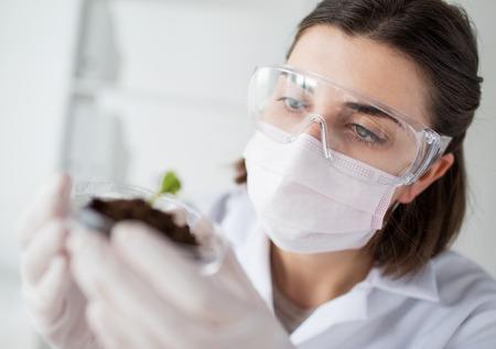investigador cientifico: primer plano de mujer de ciencias joven que llevaba la m�scara protectora, sosteniendo el plato de Petri con la planta y muestra de suelo en laboratorio bio