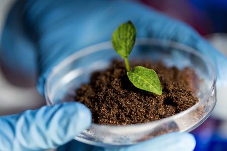 바이오 실험실에서 식물과 토양 샘플 페트리 접시를 들고 과학자 손을 닫습니다