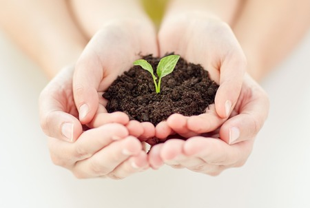 woman gardening: people, charity, family and ecology concept - close up of child and parent cupped hands holding soil with green sprout at home