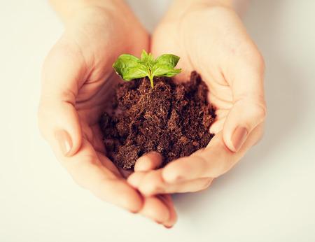 beeld van de vrouw handen met groene spruit en grond Stockfoto