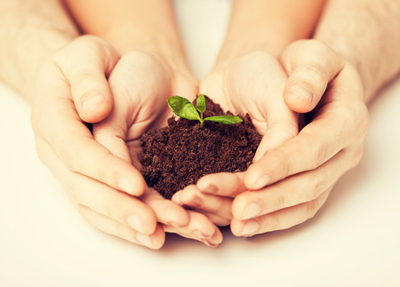 mother earth: picture of couple hands with green sprout and ground