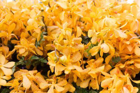 botanika: zahradnictví, botanika, textury a flóra koncepce - krásné květy orchidejí