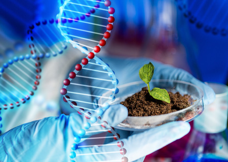 to plant structure: science, biology, ecology, research and people concept - close up of scientist hands holding petri dish with plant and soil sample in bio laboratory over dna molecule structure