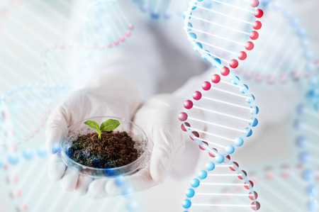 researching: science, biology, ecology, research and people concept - close up of scientist hands holding petri dish with plant sample in bio laboratory and dna molecule structure Stock Photo