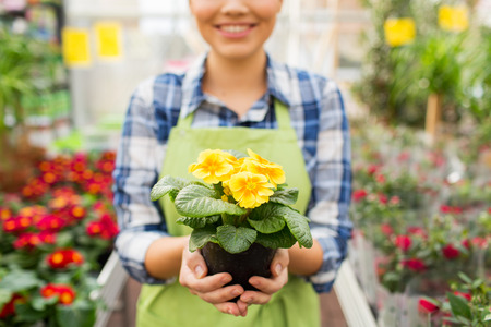 smiling woman in a greenhouse: people, gardening and profession concept - close up of happy woman or gardener holding flowers at greenhouse or shop
