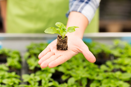 hand care: people, gardening, planting and profession concept - close up of woman hand holding seedling sprout at greenhouse Stock Photo
