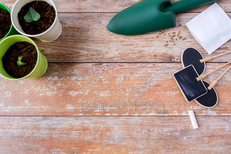 seedling: gardening and planting concept - close up of seedlings, garden trowel, seeds and nameplates on table