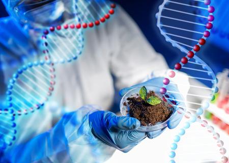 wetenschap, biologie, ecologie, onderzoek en mensen concept - close-up van wetenschapper handen die petrischaaltje met planten en grondmonster in bio laboratorium dan DNA-molecuul structuur Stockfoto