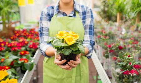 사람, 정원 가꾸기, 직업 개념 - 가까이 행복한 여자 또는 온실 또는 상점에서 꽃을 들고 정원사의 최대