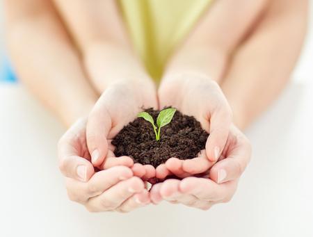 人、慈善団体、家族とエコロジーのコンセプト - 子供のクローズ アップと緑の芽が付いている土を家庭で保持カップの手の親 写真素材