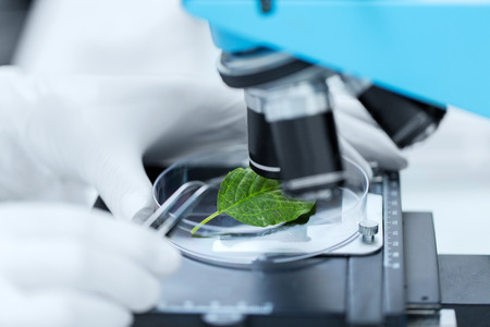 science, chemistry, biology and people concept - close up of scientist hand with microscope and green leaf making research in clinical laboratory Imagens