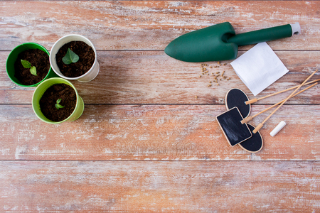 a plant: gardening and planting concept - close up of seedlings, garden trowel, seeds and nameplates on table