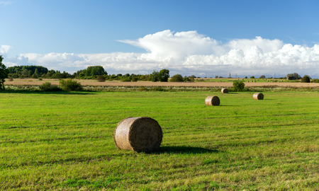 hayroll: agriculture, harvesting, farming, season and nature concept - haystacks or hay rolls on summer field Stock Photo