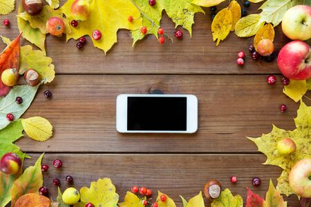 black berry: season, advertisement and technology concept - close up of smartphone in frame of autumn leaves, fruits and berries on wooden table Stock Photo