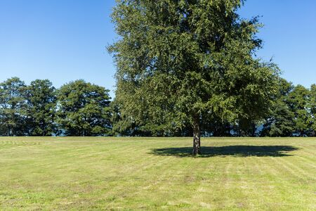summer nature: nature, season, landscape and environment concept - summer field and trees