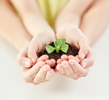 soil: people, charity, family and ecology concept - close up of child and parent cupped hands holding soil with green sprout at home