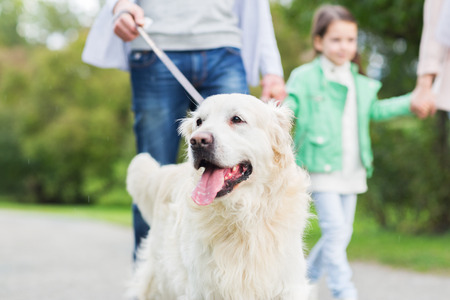 family, pet, domestic animal and people concept - close up of family with labrador retriever dog on walk in park Imagens