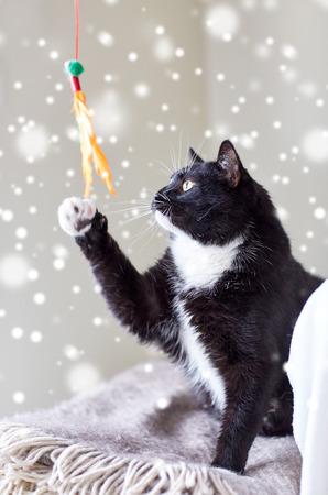 piuma bianca: animali domestici e la riproduzione di concetto - gatto bianco e nero gioca con il giocattolo piuma su effetto neve