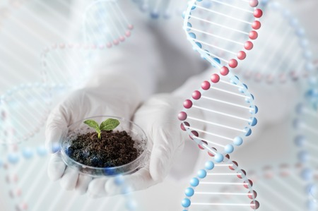 scientific farming: close up of scientist hands holding petri dish with plant sample in bio laboratory and dna molecule structure Stock Photo