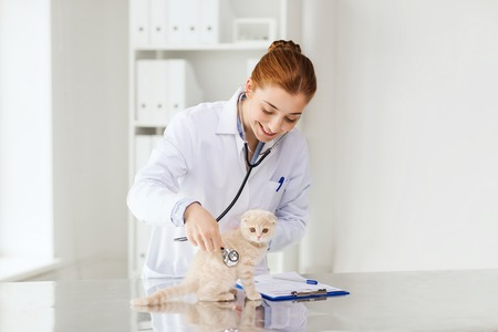 veterinarian: medicine, pet, animals, health care and people concept - happy veterinarian doctor with stethoscope checking scottish fold kitten up at vet clinic