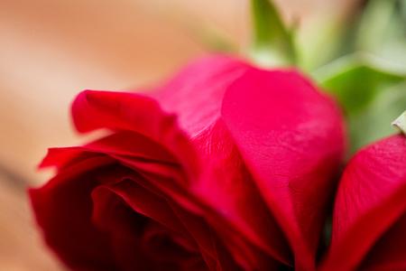 uprzejmości: miłość, data, romans, Walentynki i święta pojęcie - zamknąć się z czerwoną różą kwiaty